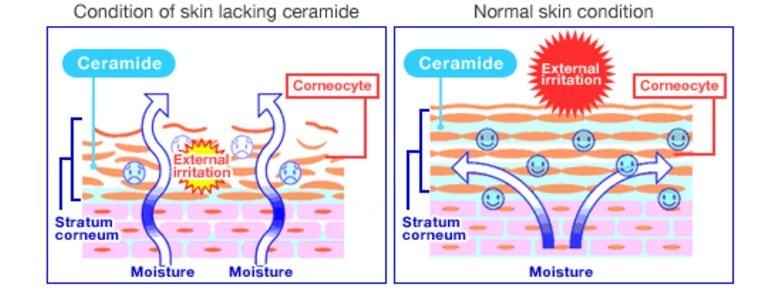 Sữa rửa mặt Cerave chứa các chất tốt cho da