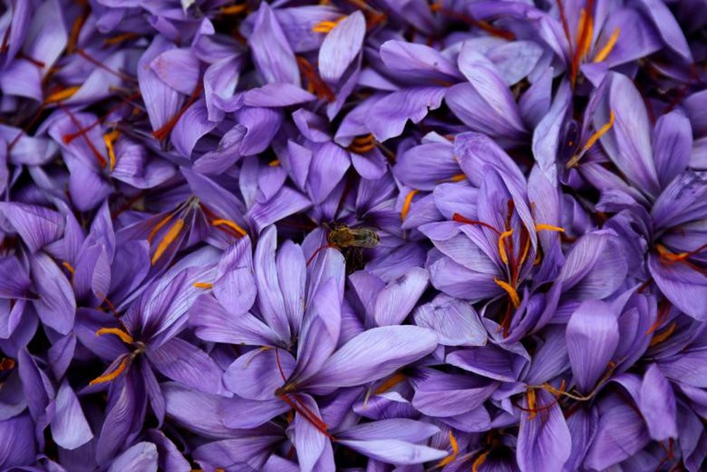 Saffron có những tác dụng gì trong làm đẹp?