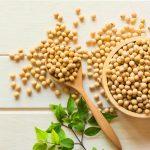 Học ngay cách làm mầm đậu nành tại nhà cực kỳ đơn giản